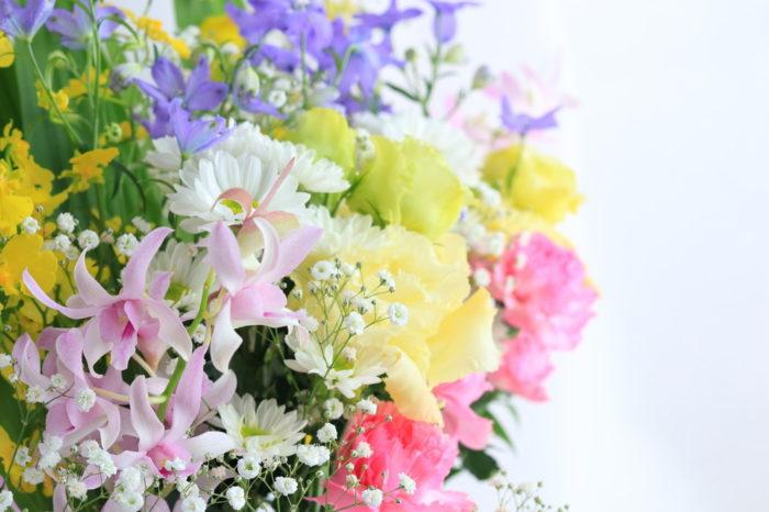 ペット(犬・猫)のお供え花にはどんな種類を選べばいい?