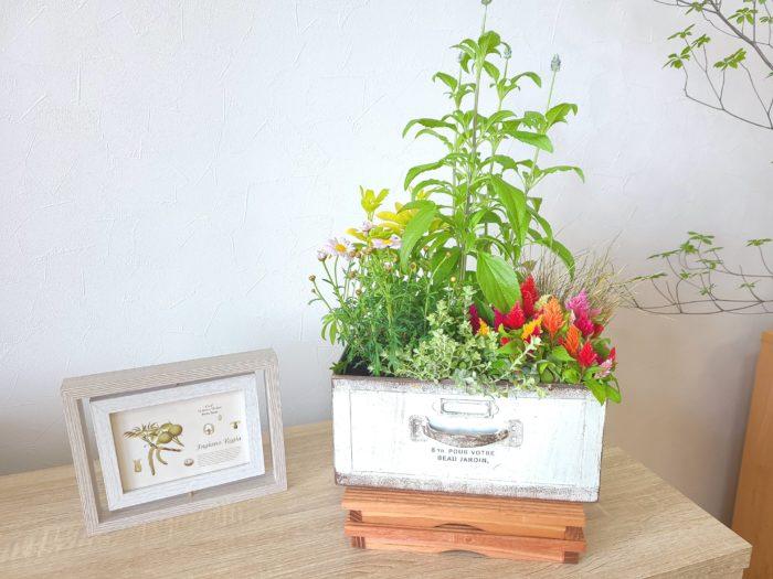 季節の寄せ植え鉢