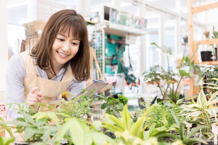 引越し祝い・新築祝いで喜ばれる観葉植物10選!