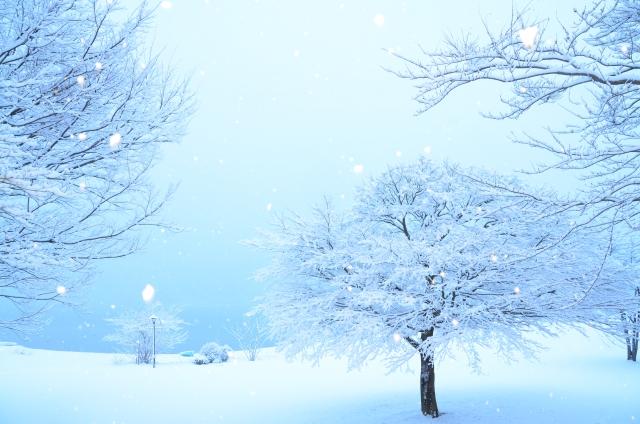 冬のお花特集