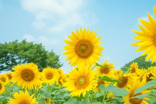 夏のお花特集
