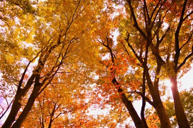 秋のお花特集