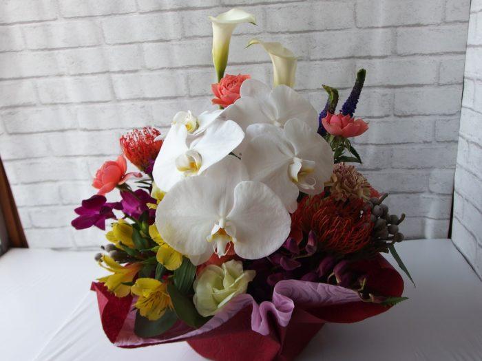 推し花は胡蝶蘭